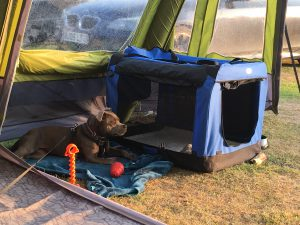 Pepper camping with us