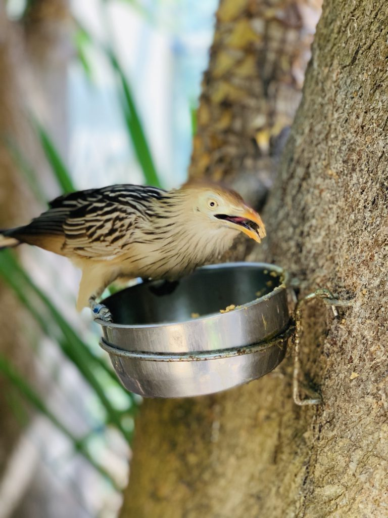 bird at Touroparc Zoo