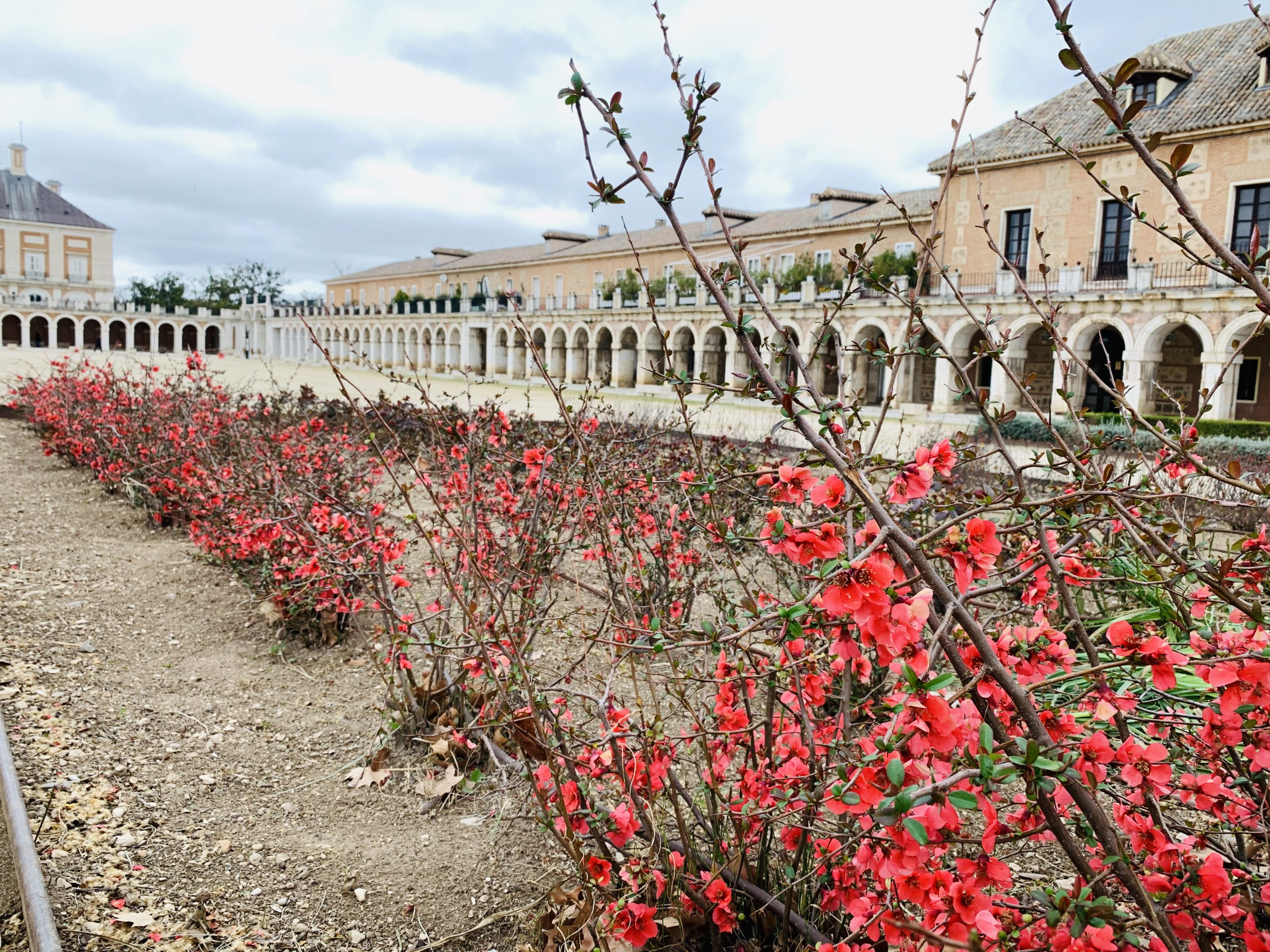 Flowers outside the Palace in Aranjuez
